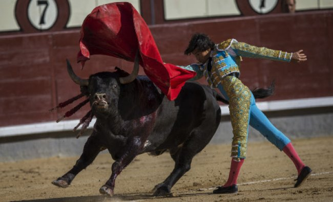 Spanish bullfighter Curro Diaz performs with a Gavira ranch fighting bull during a bullfight ...