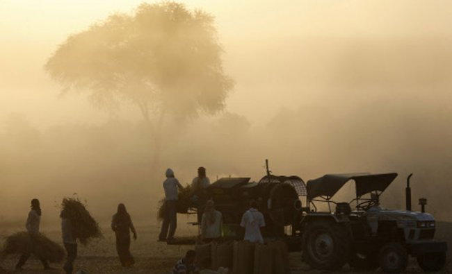 Labourers thrash cornflower stalks in a field during morning hours near Vrindavan...