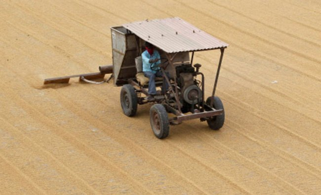 A worker spreads paddy crop for drying at a rice processing unit in Bavla...