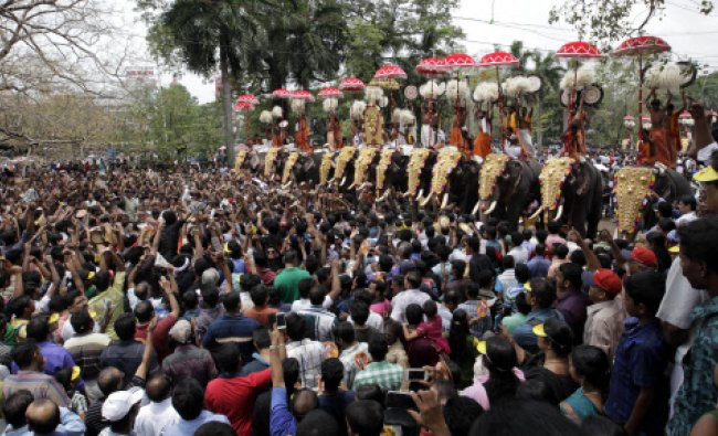 Decorated temple elephants participate in a Pooram festival procession at a temple in Thrissur...