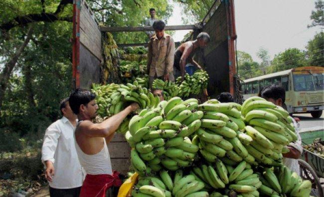 Fruit sellers unload bananas from a truck at wholesale market Mundera Mandi in Allahabad...