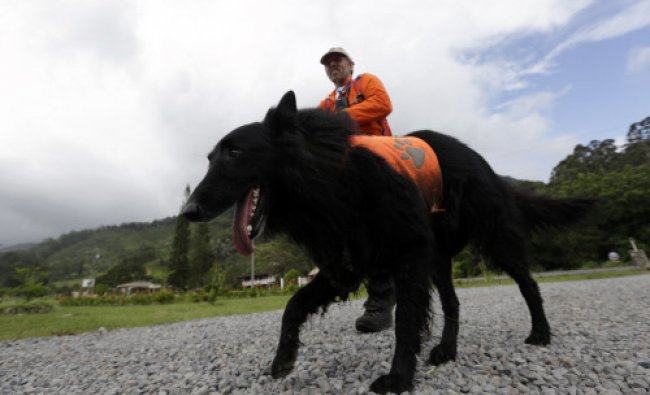 A sniffer dog and a member of independent Dutch rescue group Reddingshonden RHWW search for two...