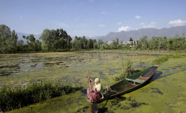 A woman rows her boat in the polluted waters of Dal Lake in Srinagar...