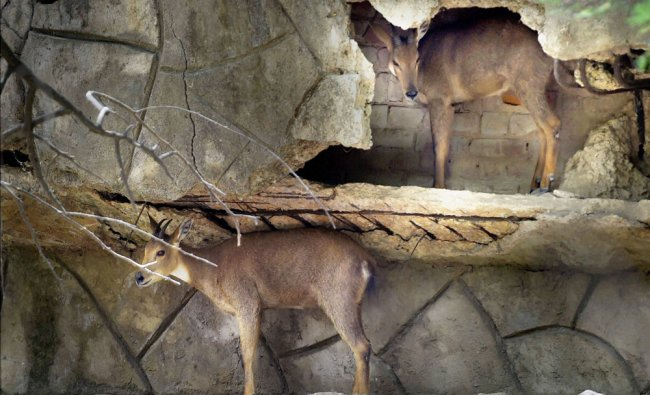 Deers seek protection from the scorching heat on a hot day in Delhi Zoo ...