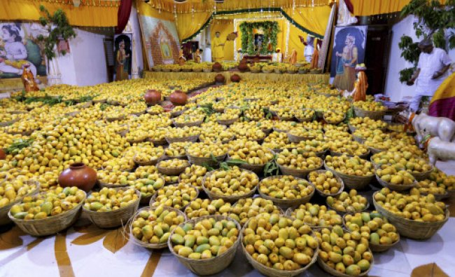 Priests perform worship of Lord Krishna with 1.25 Lakh mangoes during a mango festival...