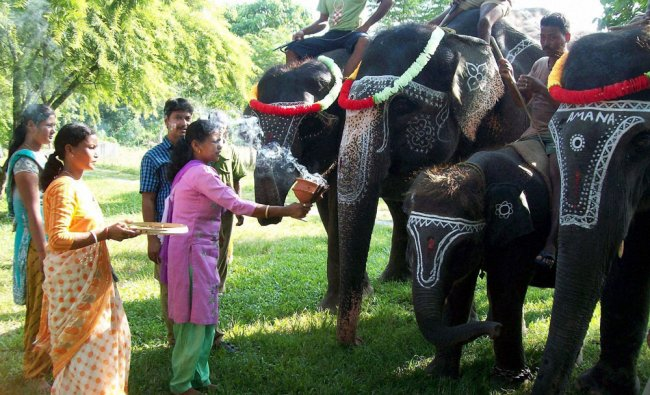 Villagers perform worship of elephants on the occasion of Biswakarma Puja...