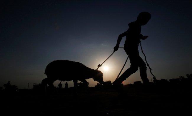 A boy walks with a sheep after buy it from a market ahead of the Eid al-Adha, in Srinagar...
