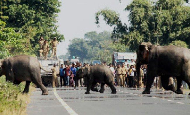 People wait as three wild elephants cross