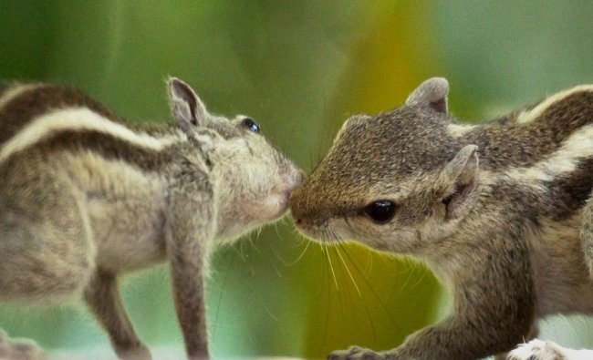 A pair of squirrel in New Delhi on Sunday...