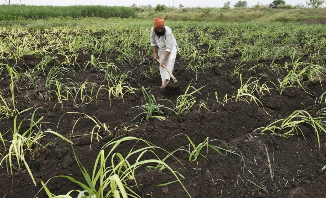 A farmer ploughs in a sugarcane field on the outskirts of Pune...