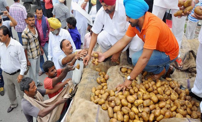 Members of Jalandhar Potato Growers Association distributing potatoes free of cost in protest ...