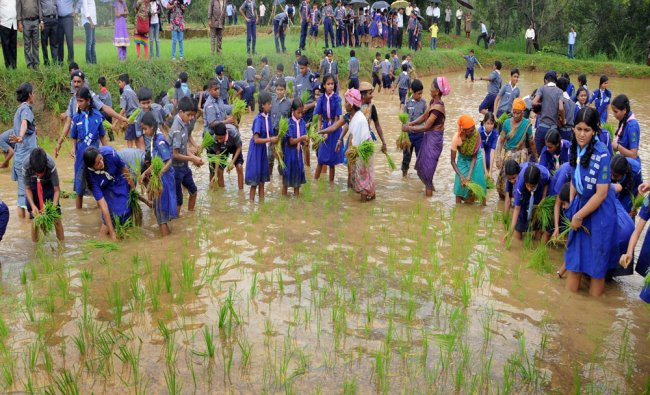 Scouts and Guides try their hand in planting paddy saplings as a part of Aati Koota...
