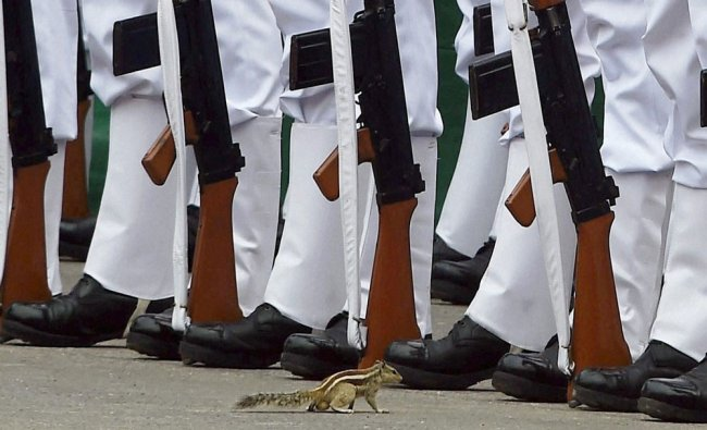 A squirrel hops near soldiers during the 69th Independence Day celebrations...