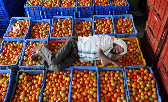 A farmer sleeps on tomatoes as its prices plunged in Chikmagalur...