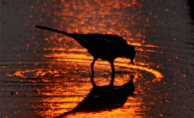 A bird is seen at a park where the sun is reflected from water on the first day of New Year...