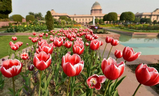 Flowers in full bloom during the press preview at the Mughal Garden ...