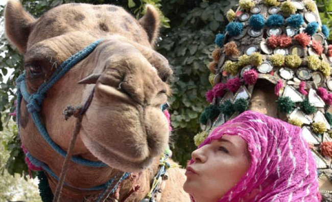 A tourist poses with a camel in Bikaner on Wednesday...