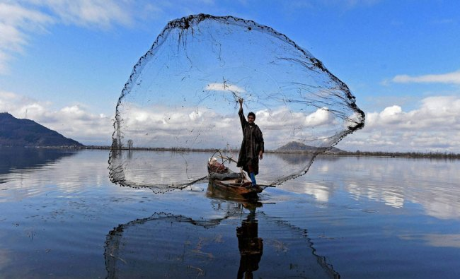 A fisherman casts his net to catch fish at the Dal Lake in Srinagar on Saturday...