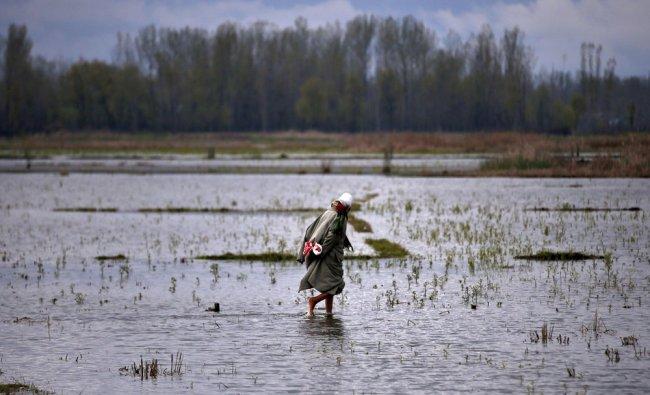 A farmer checks on his crops near Srinagar in the Kashmir region of India...