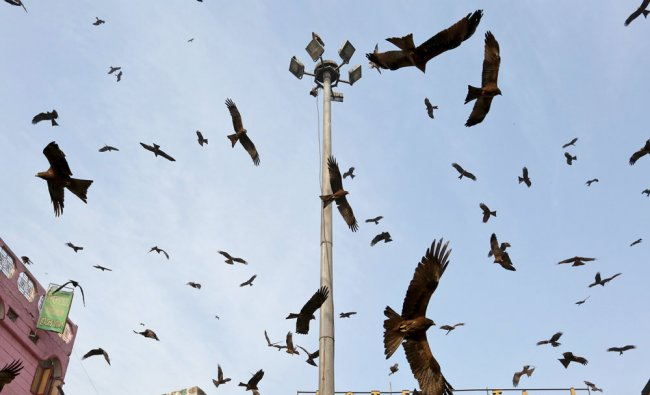 Birds circle above Chandni Chowk in the old quarters of Delhi March 25, 2016...