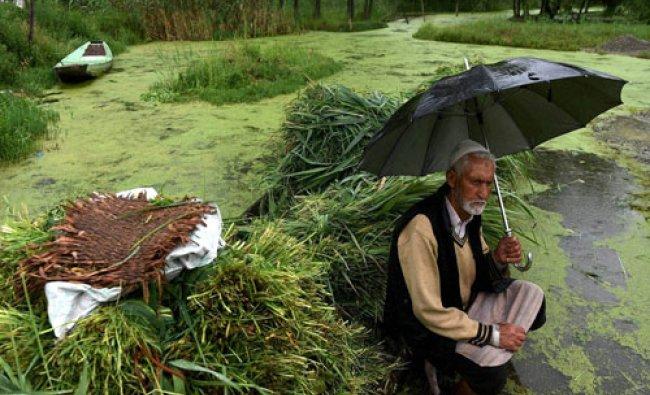 An elderly vendor waits for customers of green grass during rains in Srinagar....