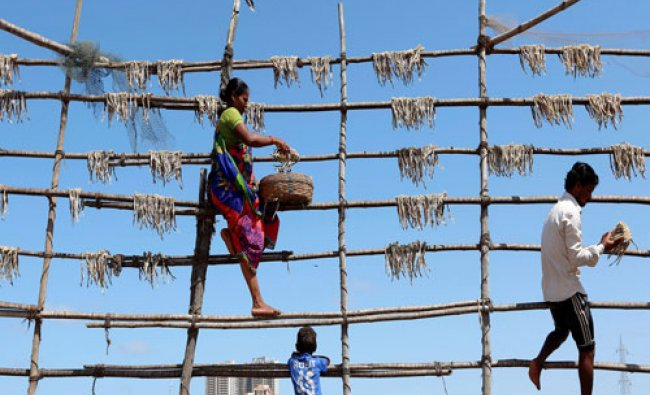 People hang fish to dry on bamboo poles in Mumbai...