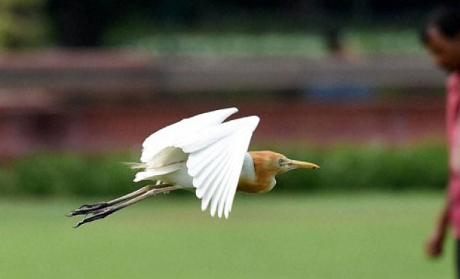 An egret takes off in New Delhi on Tuesday...