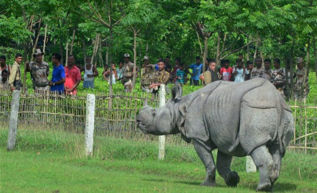 Villagers looking at a one horned rhinoceros that strayed in...