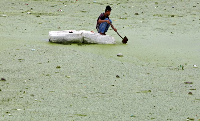 A boy rows his makeshift raft in the weed covered Sabarmati river in Ahmedabad...