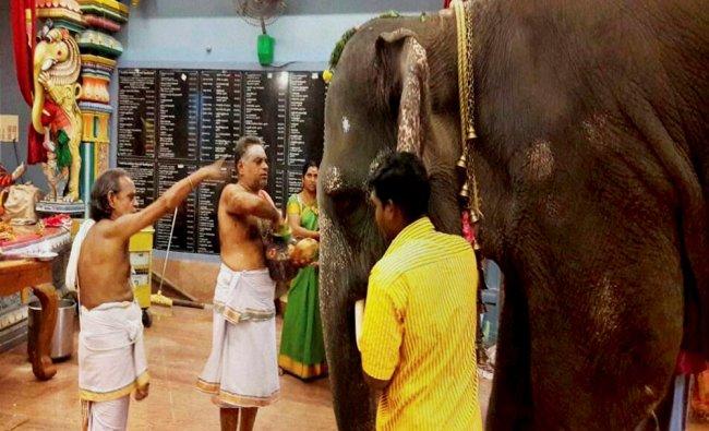 Priests perform Gaja Pooja in Manakula Vinayagar temple, dedicated to the god Ganesha...