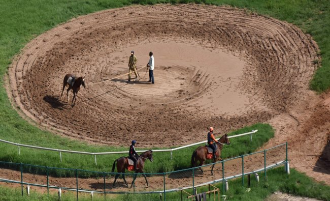 Horses undergoing exercise and training by handlers at Race Course in Bengaluru...
