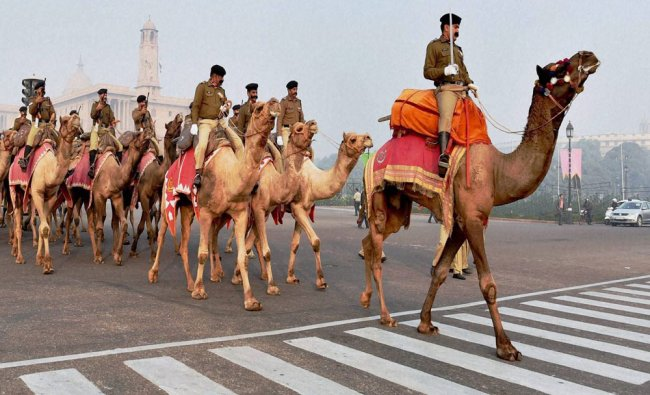 BSF\'s camel-mounted contingent during a rehearsal at Rajpath ahead of the Republic Day parade...