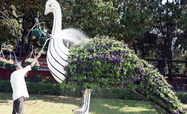 A labour watering a model of Peacock which is made with flowers ahead of Republic Day Flower...
