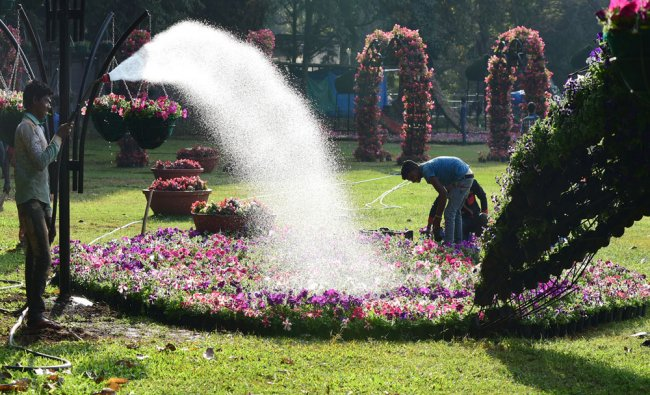 Workers busy installing flower pots to make Peacock shape as part of the Republic Day Flower show...