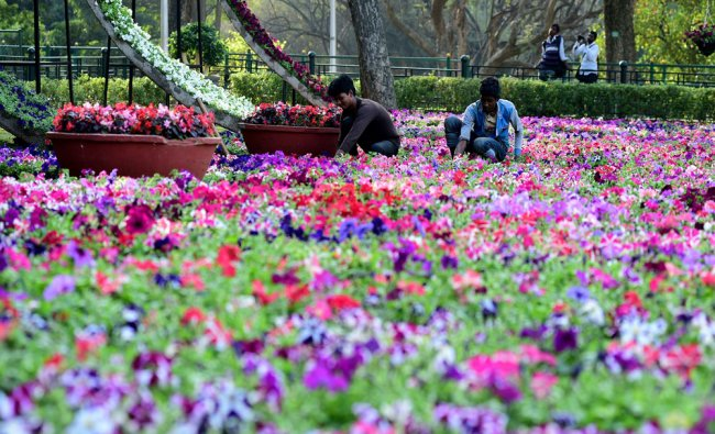 Workers busy installing flower pots as part of the Republic Day Flower show at Glass House...