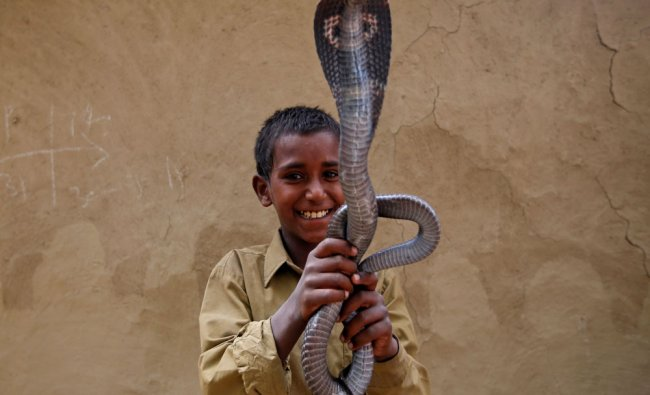 Ravi Nath poses for a photograph with a cobra snake in Jogi Dera (Snake charmers settlement)...