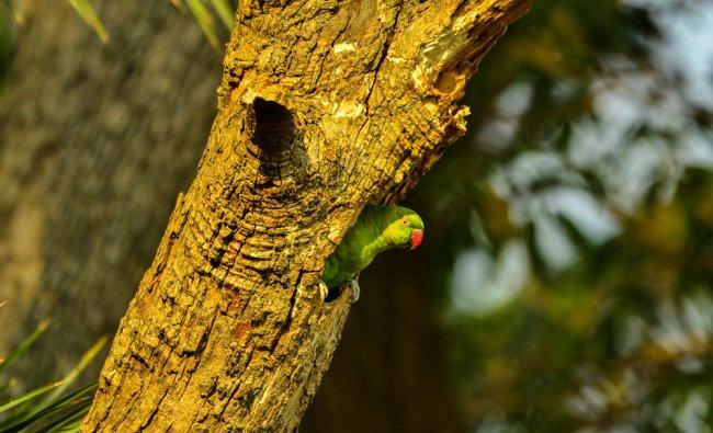 Photo by Debashish Das