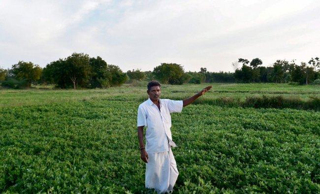 Farmer G Subramanian at his farm in Neduvasal Village in Pudukottai District of Tamil Nadu....
