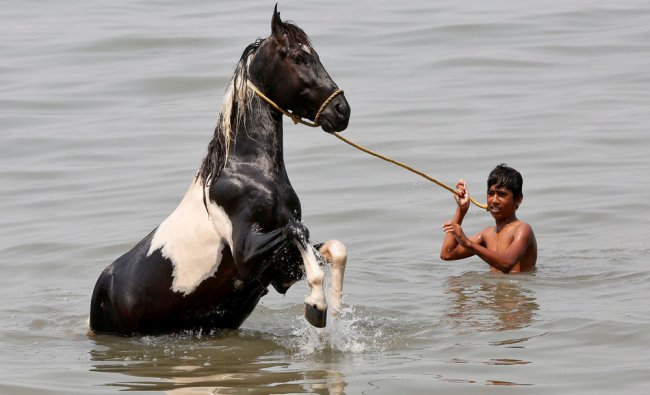 A boy bathes his horse in the waters of the Arabian Sea in Mumbai...