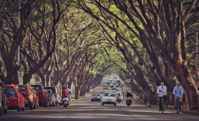 Under the canopy Bengaluru