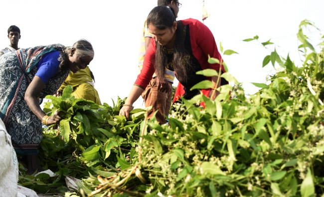 People are purchasing Mango leaves and Neem leaves on the eve of Ugadi festival ...