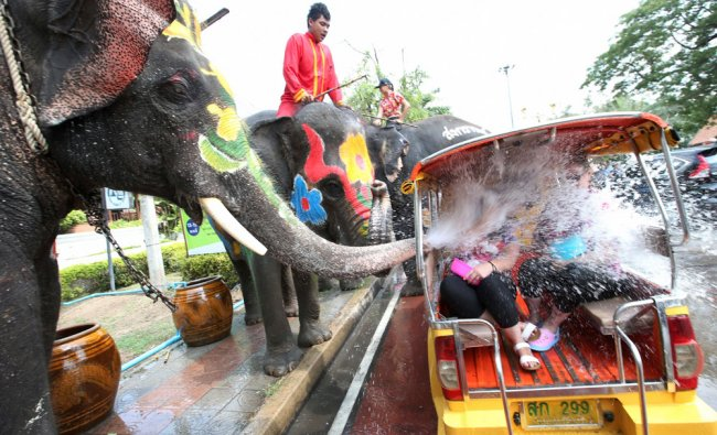 With assist from its mahouts, elephants blow water from its trunk to tourists on motor-tricycle ...