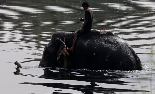 A mahout, or elephant owner, takes his elephant into river Yamuna for a bath on a hot summer...