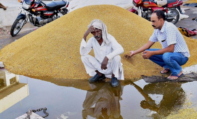 A man holds his head in despair after grains got drenched in rains at a market in Bikaner on ...
