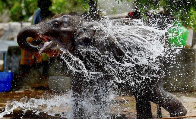An elephant calf gets a shower on a hot summer day at Anna National Zoological Park, in Chennai...