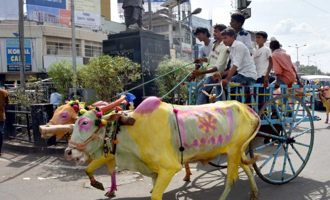 People ride bullock Cart & bullocks body is painted in pink, yellow & gren colour...