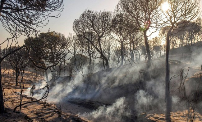 Smoke rises from the ground by charred trees near the access to the Cuesta Maneli beach...