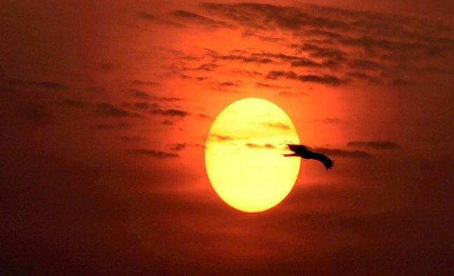 A black kite flies past during Sunrise in New Delhi...