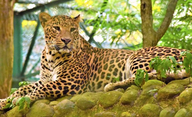 Clicked by Sharath Basavaraju at Bannerghatta National Park