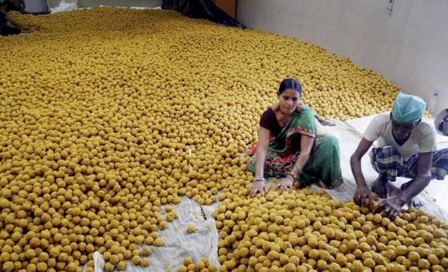 Four lakhs of laddoos being prepared for 31st anniversary celebrations of Sai Baba Temple....